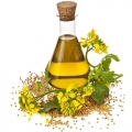Rapeseed Oil Cannot Replace Olive Oil in a Mediterranean-Style Diet